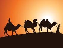 Caravan van Bactrische kamelen en bedouins in woestijn Stock Foto