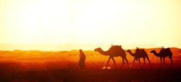 Caravan van kamelen in de woestijn van de Sahara, Marokko royalty-vrije stock fotografie