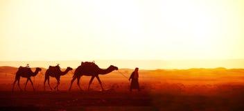 Caravan van kamelen in de woestijn van de Sahara, Marokko stock afbeelding