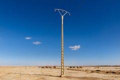 Caravan van kamelen en de transmissielijn Stock Foto's