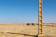 Caravan van kamelen en de transmissielijn Royalty-vrije Stock Afbeelding
