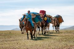 Caravan van kamelen in Mongolië Royalty-vrije Stock Afbeeldingen