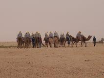 Caravan van kamelen in Sahara Desert in het noorden van het Afrikaanse continent Stock Afbeeldingen