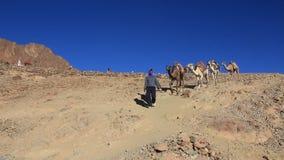 Caravan. Wilderness of Mount Sinai. Egypt stock footage
