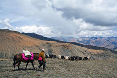 Caravan of yaks Stock Photo