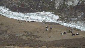 Caravan Yaks in the Himalayas. Caravan of yaks in the Himalayas. Yaks carry loads in the mountains of Nepal stock video