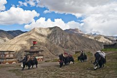 Caravan of yaks in Inner Dolpo, Nepal Stock Photos