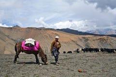 Caravan of yaks. SHEY LA, NEPAL - SEPTEMBER 5: Tibetan nomad with yaks walking across Shey La pass on September 5, 2011 in the Nepal Himalaya Stock Images