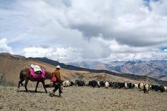 Caravan of yaks Royalty Free Stock Photo