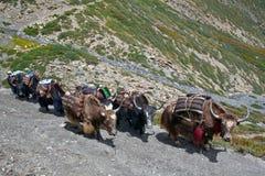 Caravan of yaksl Royalty Free Stock Images