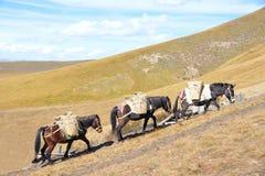 Caravana Imagen de archivo libre de regalías