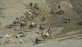 Caravana 3 do camelo Fotografia de Stock Royalty Free