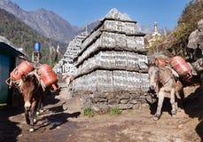 Caravana das mulas com cilindros de gás Fotos de Stock