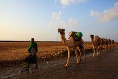 Caravana de camellos fotografía de archivo libre de regalías