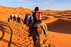 Caravana de camellos con el turista en el desierto en la puesta del sol Fotos de archivo