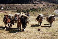 Caravana de los caballos Imagen de archivo libre de regalías