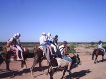 caravana de los camellos foto de archivo libre de regalías
