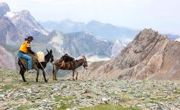 Caravana del burro en área de montaña asiática remota Fotografía de archivo