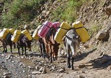 Caravana del burro en montañas de Nepal Imagen de archivo libre de regalías