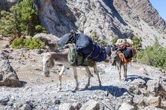 Caravana del burro en montañas de Tayikistán Fotos de archivo libres de regalías