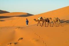 Caravana del camello en dunas del desierto de la arena de África Fotografía de archivo libre de regalías