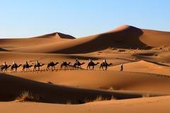 Caravana del camello en el desierto de Sáhara Imagenes de archivo