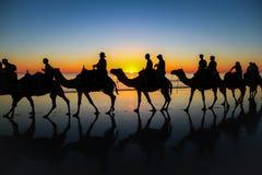 Caravana del camello en la playa en la puesta del sol foto de archivo libre de regalías