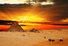 Caravana del camello en la puesta del sol Fotos de archivo libres de regalías