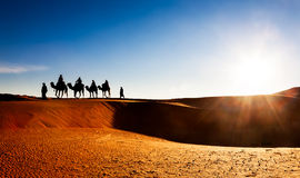 Caravana del camello en las dunas de arena en el desierto imágenes de archivo libres de regalías