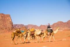 Caravana del camello en Wadi Rum majestuoso foto de archivo