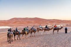 Caravana do camelo ao deserto de sahara Fotos de Stock Royalty Free