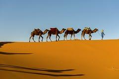 Caravana do camelo que atravessa as dunas de areia douradas no Sahara fotografia de stock royalty free