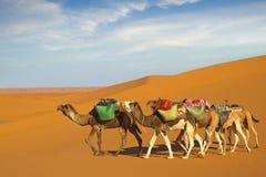 Caravana do deserto fotografia de stock royalty free