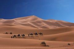 Caravana dos camelos Fotografia de Stock Royalty Free