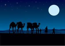 Caravana dos camelos do deserto Fotografia de Stock Royalty Free