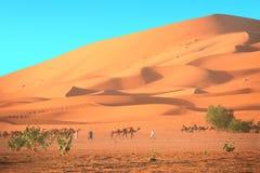 Caravana dos camelos no deserto de Sahara, Marrocos Fotos de Stock Royalty Free
