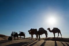 Caravana en las dunas Fotografía de archivo libre de regalías