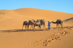 Caravana turística del camello en dunas del desierto de la arena de África Imágenes de archivo libres de regalías