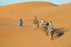 Caravana turística del camello en dunas del desierto de la arena de África Fotografía de archivo