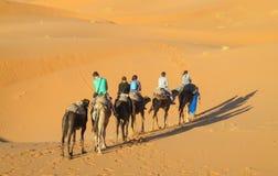 Caravana turística del camello en dunas del desierto de la arena de África Imagenes de archivo