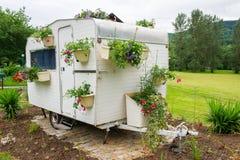 Flores en acampar Imágenes de archivo libres de regalías