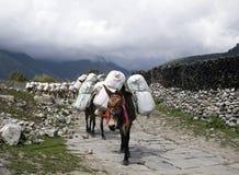 Caravane d'âne Photographie stock libre de droits