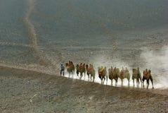 Caravane de chameau Image libre de droits