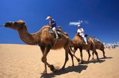Caravane de chameau dans le désert de fleuve de Sha Photographie stock