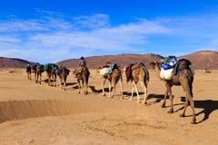 Caravane de chameau passant par le désert Photo stock