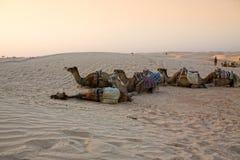 Caravane de chameaux dans le désert de Sahara. Photographie stock libre de droits