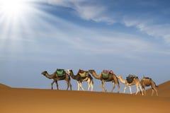 Caravane de désert photos libres de droits