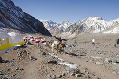 Caravane de mules dans la plaza de Mule Images libres de droits