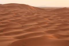 caravane de taille d'une fourmi sur une mer des vagues molles de dune de sable Image stock