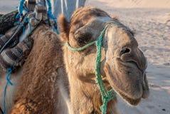 Caravane des chameaux à la halte Photo stock